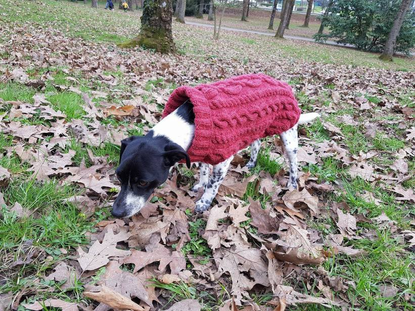 pull-tricot-torsade-chien-dog-knit-drops-bergere-de-france-fileco-vieille-morue-11