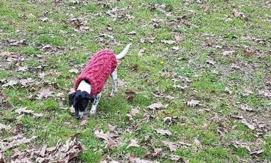 pull-tricot-torsade-chien-dog-knit-drops-bergere-de-france-fileco-vieille-morue-13