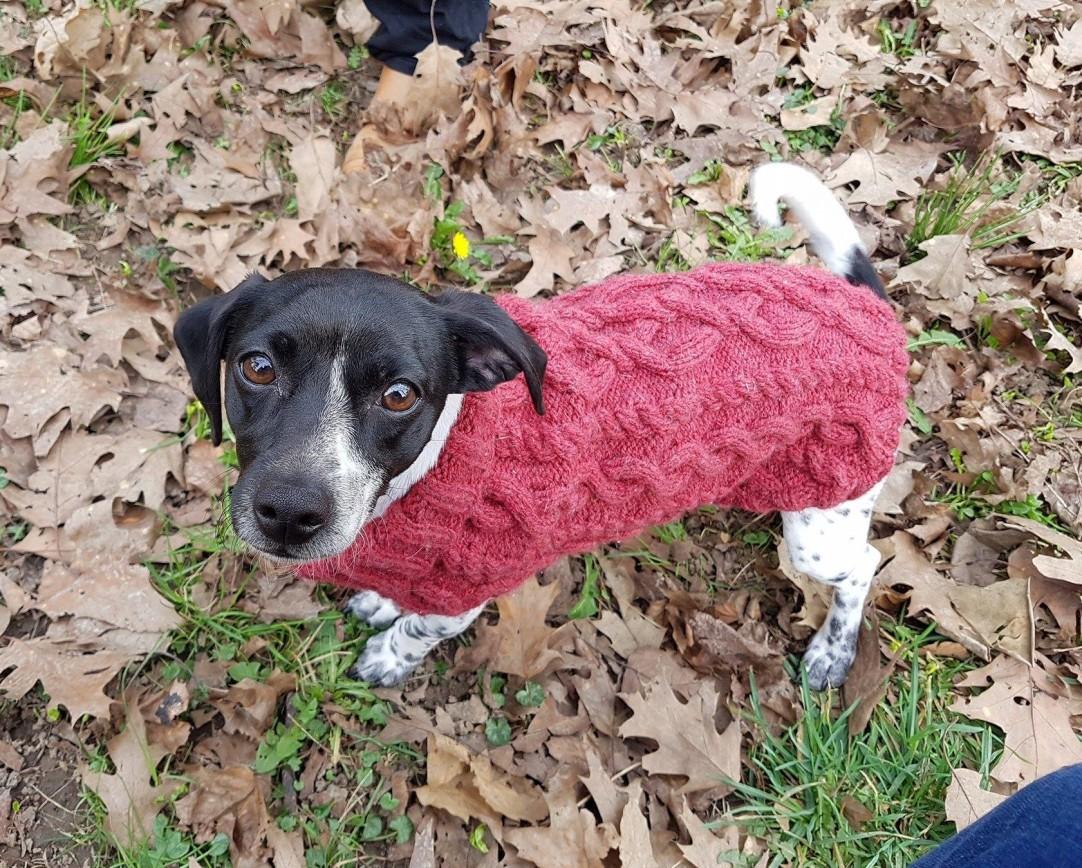 pull-tricot-torsade-chien-dog-knit-drops-bergere-de-france-fileco-vieille-morue-8