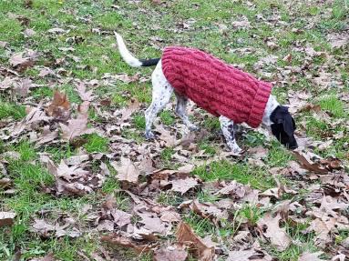 pull-tricot-torsade-chien-dog-knit-drops-bergere-de-france-fileco-vieille-morue-9